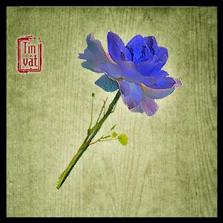 Hương Mai Khôi Hoa